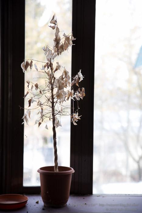 白樺湖グランドホテル_枯れた植木