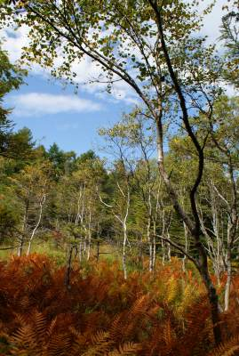 2008_0925公園、家、マット0022.jpg