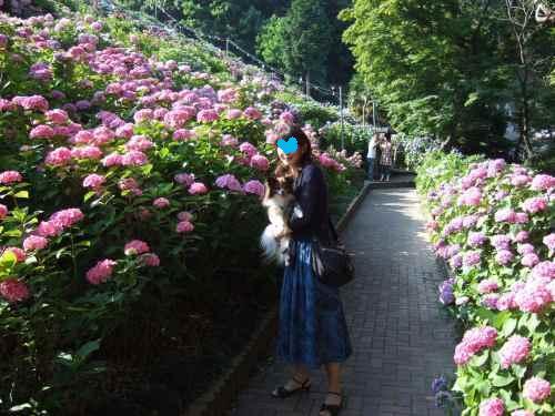 2008_0617どうわ0031.jpg