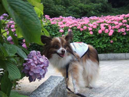 2008_0617どうわ0058.jpg