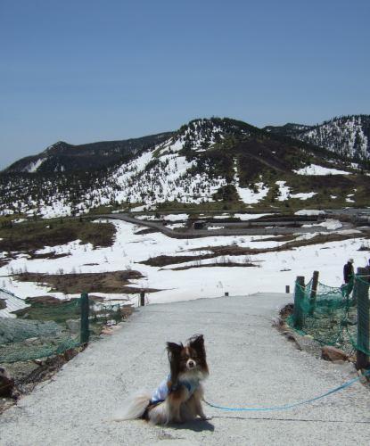 2008_0522伊良湖0039.jpg