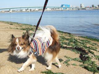 2008_0225海0013.jpg