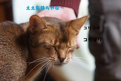 DSC06435i.jpg