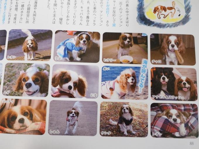 blogP4241170.jpg