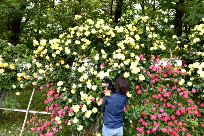 blog_DSC_9453.jpg