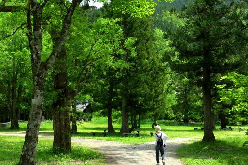 20160519_forest.jpg