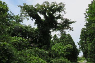 20160716_tree.jpg