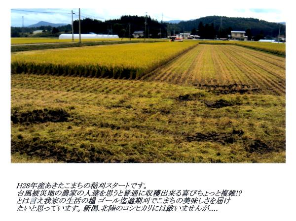 20160924_akitakomachi.jpg