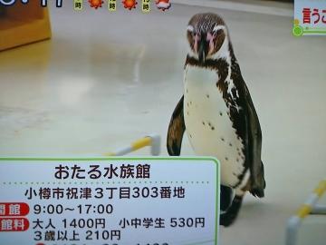 20160506-消防犬ぶん公さんより (5)