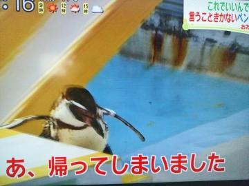 20160506-消防犬ぶん公さんより (3)