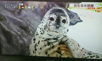 20160506-消防犬ぶん公さんより (7)