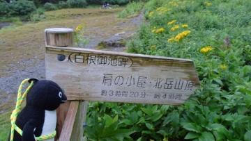 20160820-北岳 (32)