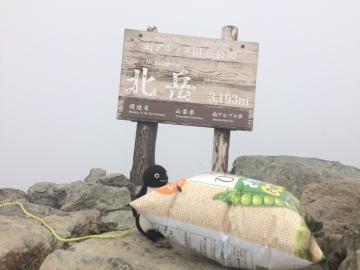 20160820-北岳 (57)