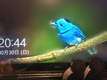 20161030-あおいとり (2)-加工