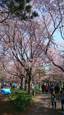 昨日の札幌円山公園