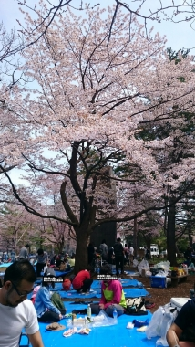 札幌円山公園での花見