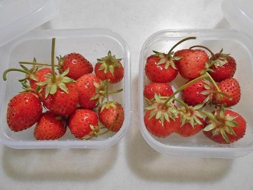160511Strawberries