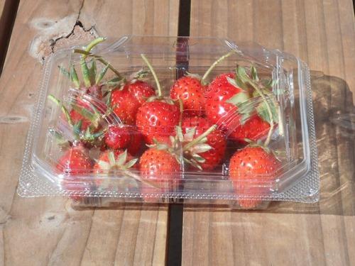 160513strawberries