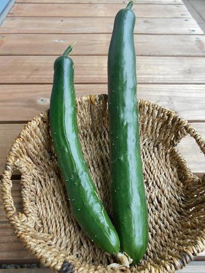 160525cucumbers2