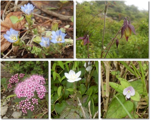 page丹沢の花
