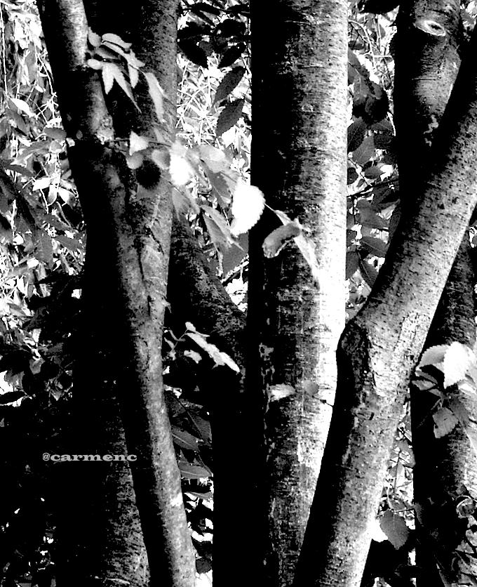 モノクロ樹木