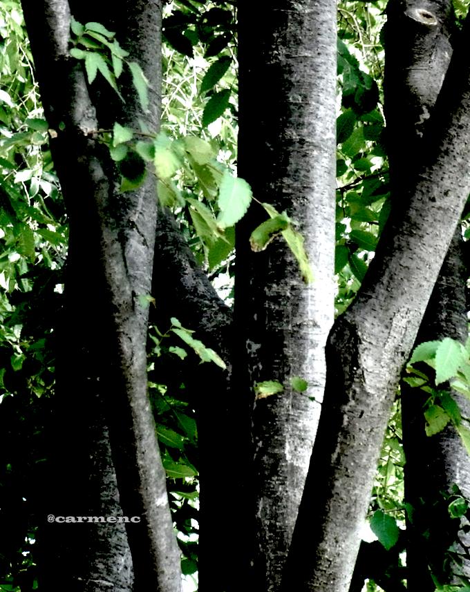 緑モノクロ樹木