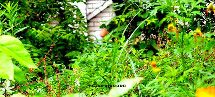 雨の日の草むら