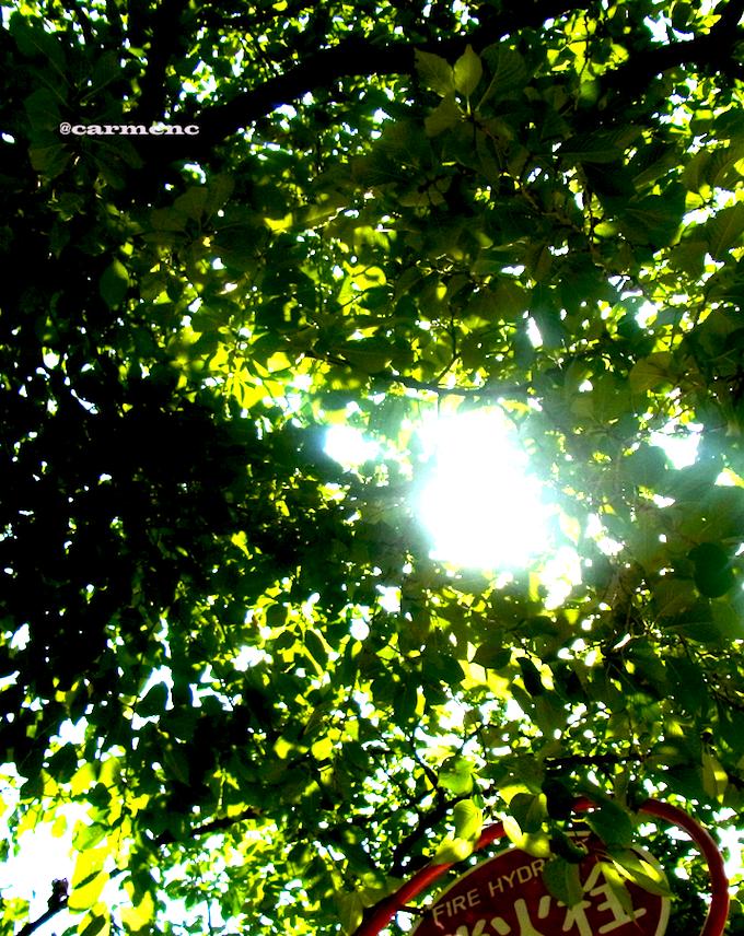 希望の陽光