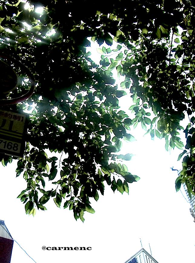 空と雲と緑