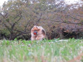 秋のはじまり 073