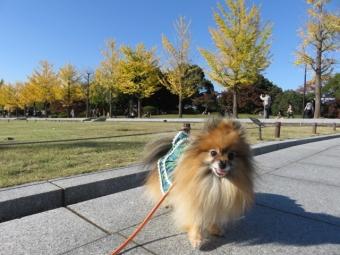 昭和記念公園 119