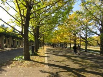 昭和記念公園 158