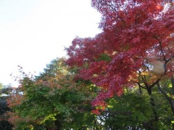 昭和記念公園 159
