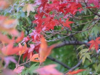 昭和記念公園 162