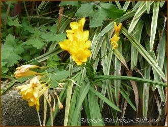 20160414  黄色 3  春の花