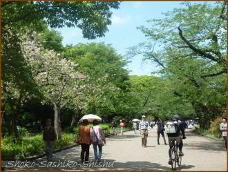 20160428  公園  7  上野から根津