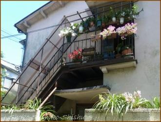 20160515  階段  1  5月の花