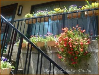 20160515  階段  2  5月の花