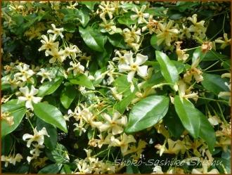 20160515  香り  2  5月の花