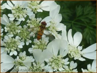 20160515  昆虫  4  5月の花