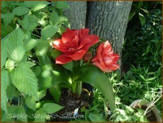20160515  色々  1  5月の花