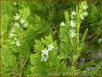 20160515  色々  7  5月の花