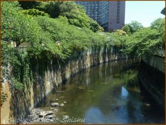 20160518 神田川  11  神田川から目白台