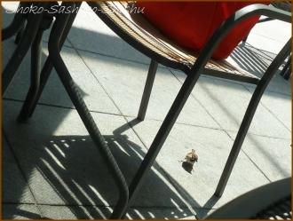 20160605  雀  7  オープンカフェ