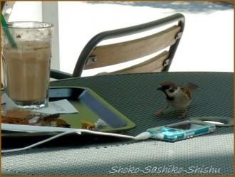 20160605  雀  13  オープンカフェ