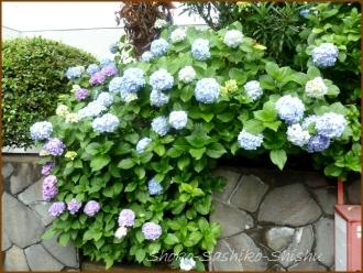 20160616  塀  2  紫陽花