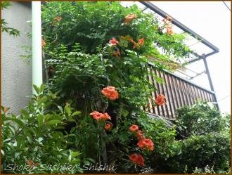 20160814  玄関  4  夏の花と
