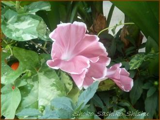 20160814  色々  6  夏の花と