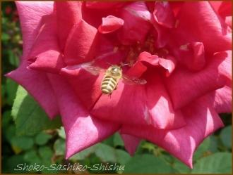 20160814  蜂  3  夏の花と