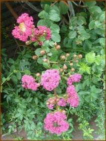 20160903  花と実  1  秋の気配